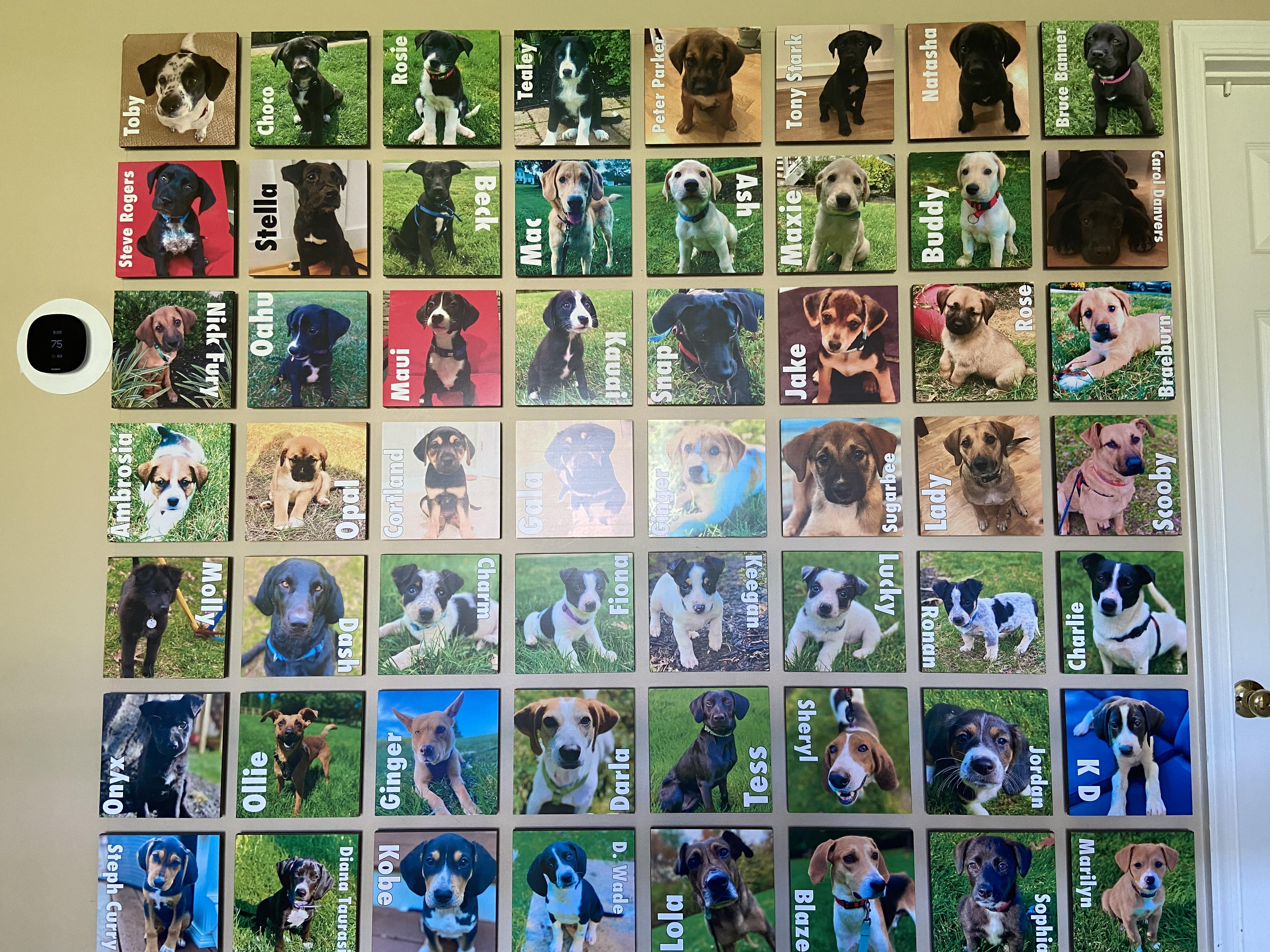 Wall of Foster Dogs