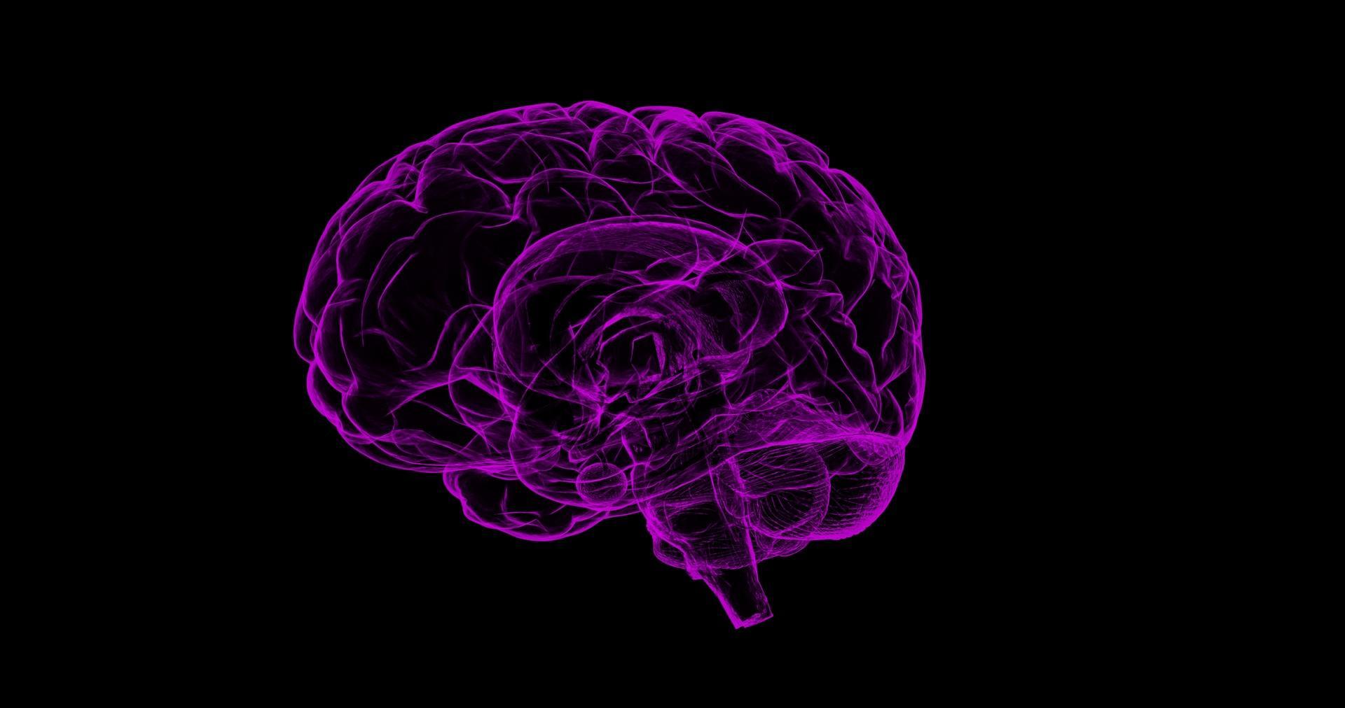 neon purple outline of brain on black background